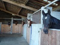 Boxes écurie retraite cheval