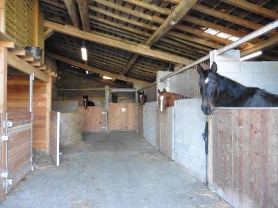 Boxes écurie retraite personnalisée chevaux