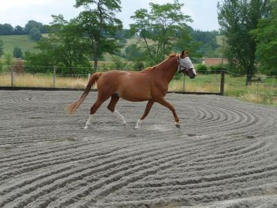 Détente cheval à la retraite