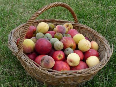 fruits - alimentation cheval personnalisée