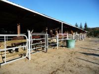 Stabulations écurie retraite cheval